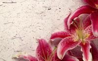Декор из лилий