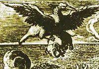 Птица Рок (она же Рох, она же Рух)