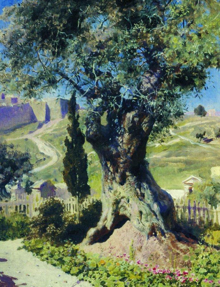 Олива в Гефсиманском саду