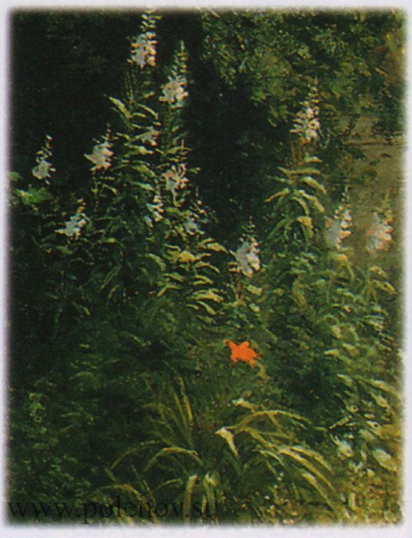 Разросшийся сад